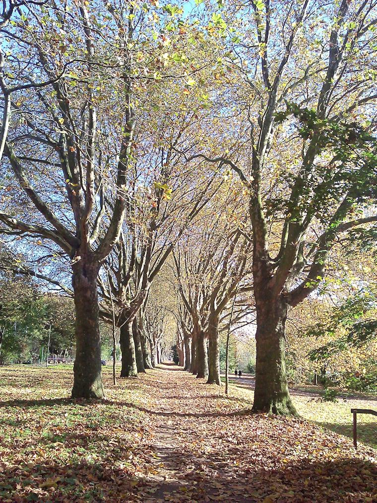 Weg unter Bäumen